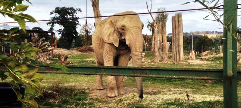 Photo of Blair Drummond Safari Park.