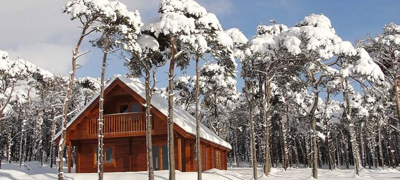 Photo of Hill of Maunderlea Lodges with snowy trees.