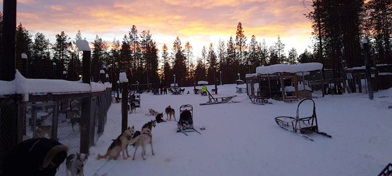 Photo of Torassieppi Reindeer Farm and Cottages.