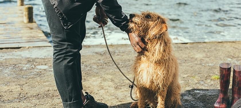 Photo of a dog on the beach.
