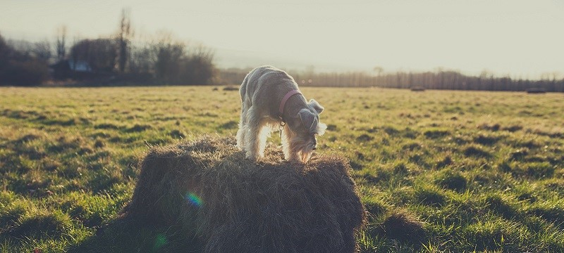 Photo of a dog in a field in Maidstone.