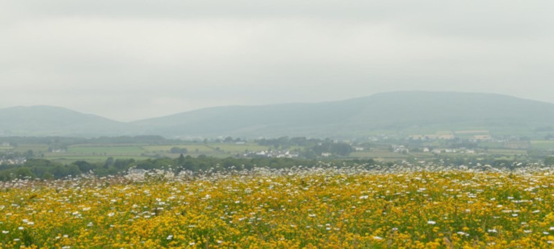 Photo of flowers at Culmore Country Park.