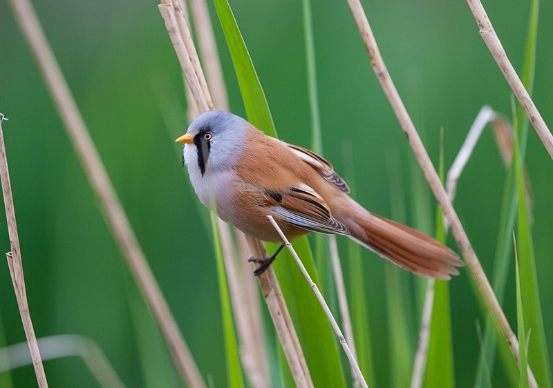 A photo of a small bird on a cane.
