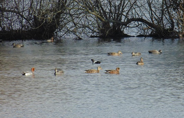 Photo of ducks at a nature reserve.