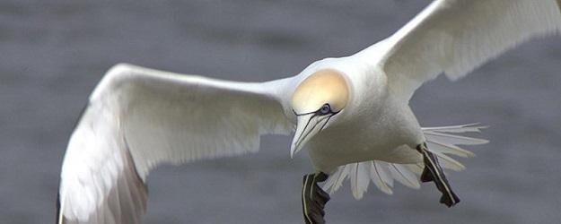 Photo of a seabird.