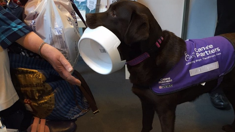 Photo of an assistance dog holding a dog bowl.