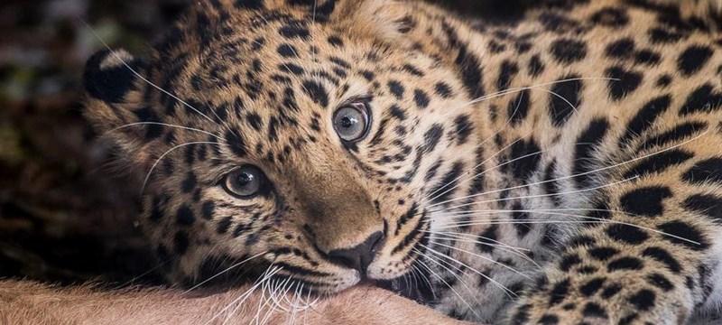 Marwell Zoo Image.