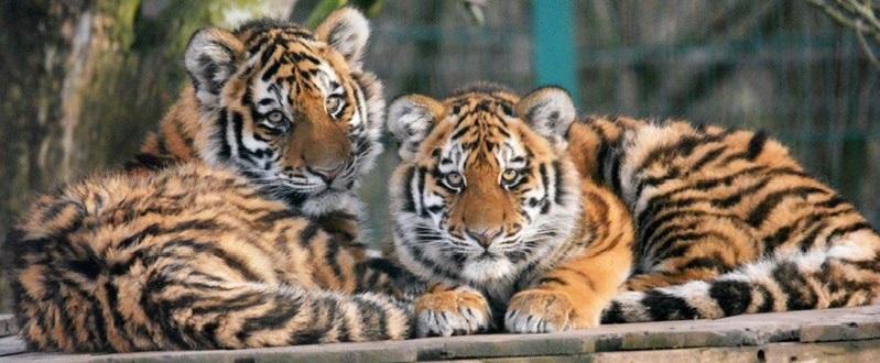 Blackpool Zoo Image