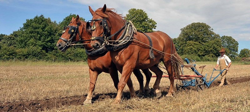 Photo of horses ploughing.