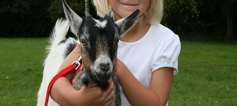 Photo of a child and a goat.