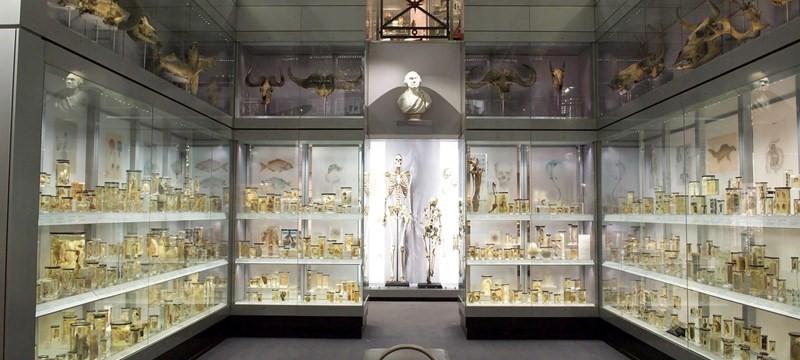 Hunterian Museum.