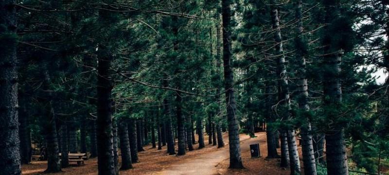 Sherwood Forest.