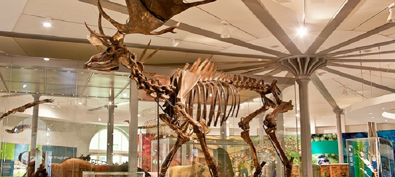 Photo of a skeleton at Leeds City Museum.